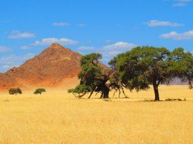 Bahnerlebnis: Afrikas Süden