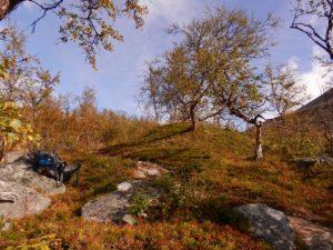 Wandern in Schweden. Landschaftsbild mit Bäumen und Rucksack