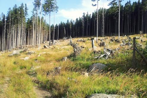 Natur Harz
