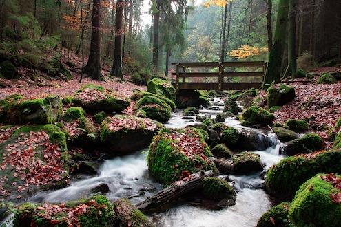 11teutoburg-forest-Natur